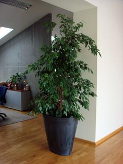 Serwis florystyczny- kwiaty, wystroje biur