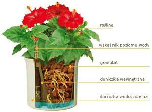 erwis florystyczny- hydroponika, kwiaty, wystroje biur