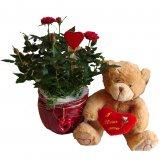 Walentynkwe róże i miś