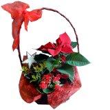 Koszyk kwiatowy na Boże Narodzenie