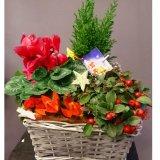 Koszyk świąteczne  kwiaty