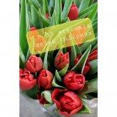 dzień tulipana